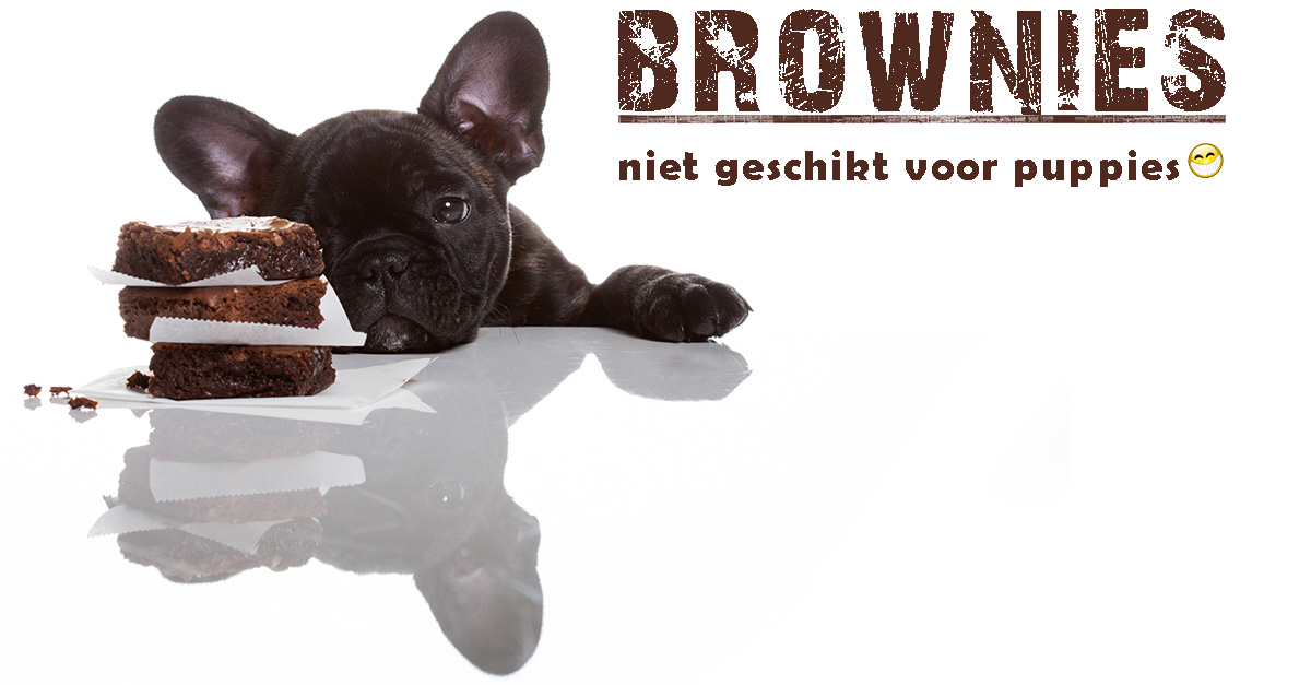 chocolate brownies with puppy